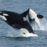 Волна неизбежного продвижения или «Поиск Потерявшихся Дельфинов»